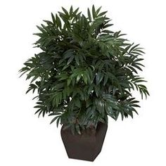 Double Bamboo Palm Silk Plant