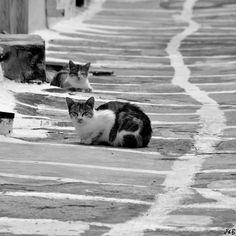 Greek Cats in Black