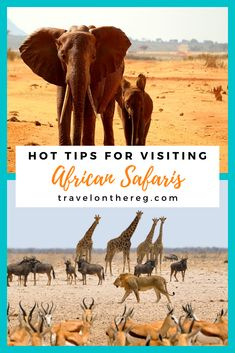 African safari holidays are the things of bucket lists. But you can't just go in blind. Check out these safari tips for how to best prepare.#africa #southafrica #africansafari #africansafarivacation #africansafarioutfit African Holidays, Safari Outfits, Safari Holidays, African Safari, Africa Travel, Bucket Lists, The Places Youll Go, Just Go, Blind