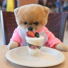 to announce has been added to the Pro Players Meet & Greet Lineup Friday & Saturday Super Cute Puppies, Cute Baby Dogs, Cute Dogs And Puppies, Cute Funny Animals, Cute Baby Animals, Animals And Pets, Jiff Pom, Celebrity Dogs, Fluffy Dogs