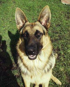 Smiley dog :3