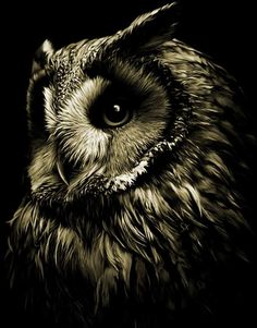 Love the black and white photography black and white animal photography Beautiful Owl, Animals Beautiful, Owl Bird, Pet Birds, Wildlife Photography, Animal Photography, Artistic Photography, Buho Tattoo, Owl Pictures