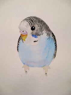 watercolor parakeets | photo