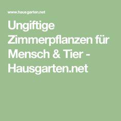Ungiftige Zimmerpflanzen für Mensch & Tier - Hausgarten.net