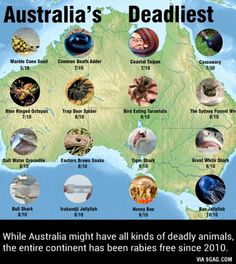 The virus that causes rabies is terrified of most native Australian animals.