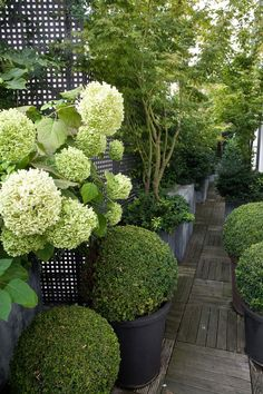 hydrangea (climbing?); trellis; use of charcoal gray-black as fence, hardcaping &/or pots, lots more green than white