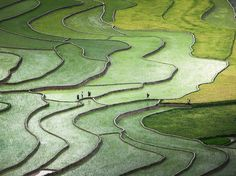 Hmong farmers cross terraced rice paddies in Yen Bai Province, Vietnam, in this National Geographic Photo of the Day.