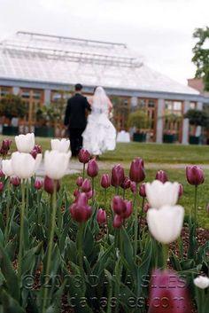 Tower Hill Botanic Garden #Massachusetts #Wedding #Travel #Tulips
