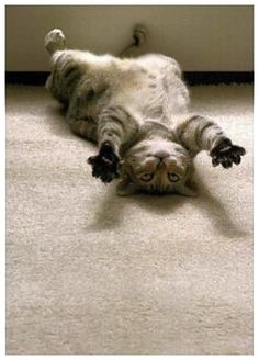 29 Cats That Forgot How To Cat