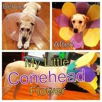 No Longer the Cone of Shame..cute idea for the pups