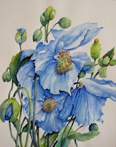 Himalayan Blue Poppies  (Watercolour)