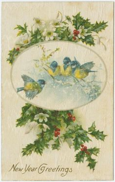 New Year Greetings from bluebirds.