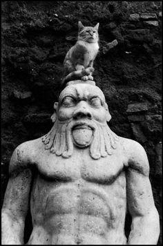 A Cat in Rome, 1959. Elliott Erwitt