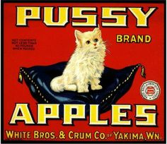 Yakima, Washington White Pussy Cat Persian  Apple Crate Label Art Print