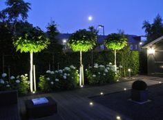 10 Best Garden Lighting Ideas for Exterior Lighting 2019 – New Decoration - Bepflanzung Contemporary Garden Design, Garden Landscape Design, Landscape Lighting, Outdoor Lighting, Lighting Ideas, Exterior Lighting, Amazing Gardens, Beautiful Gardens, Diy Jardin
