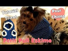 DIY Tutoriel Tricot: Manteau pour Chiens Chihuahuas, Yorkshires - YouTube