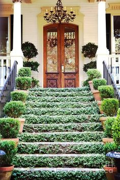 Lots of greenery leading up to this gorgeous front door in Charleston, SC