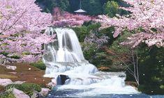 SAKURA – cherry blossom festival in Japan! Chinese Cherry Blossom, Cherry Blossom Japan, Cherry Blossom Season, Cherry Blossoms, Japan Wallpaper, Indoor Waterfall, Garden Waterfall, Les Cascades, Japan Design