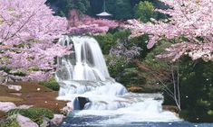 Japan - cherry blossom festival