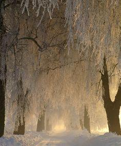 winter-was-here:    Winter Scenery