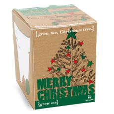Grow your own Christmas Tree with this kit