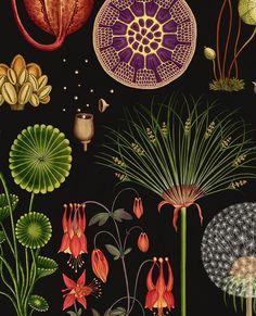 Ideas For Plants Illustration Pattern Flora Botanical Drawings, Botanical Prints, Illustration Inspiration, Illustration Blume, Motif Art Deco, Flora Und Fauna, Motif Floral, Artsy, Art Prints