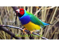 Самые красивые птицы мира фото