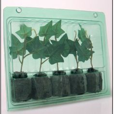 mail order plants - Google Search
