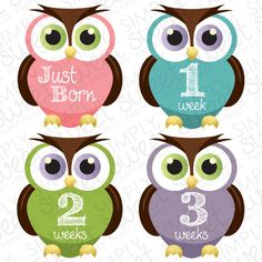 Monthly Baby Onesie DIY Printable Stickers (pdf FILE ONLY) Owl - Girl - Pink - Purple - Lime Green - Teal. $7.00, via Etsy.