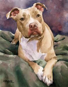 Staffordshire Terrier Art Print By Watercolor Artist Dj Rogers - Staffordshire Terrier Art Print By Watercolor Artist Dj Rogers About The Artwork This Is A Professional Open Edition Staffordshire Terrier Art Print From An Original Watercolor Painting Staf Animal Paintings, Animal Drawings, Art Drawings, Drawing Animals, Indian Paintings, Abstract Paintings, Watercolor Artists, Watercolor Animals, Watercolor Painting