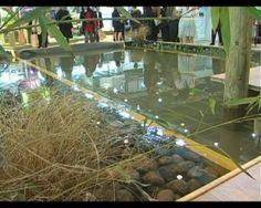 La piscine naturelle : exit les produits chimiques
