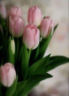 Весенний букет тюльпанов - это прекрасный подарок зимой - доставка цветов Москва.