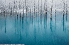 Glowing   ::  Blue Pond & First Snow, by Kent Shiraishi, captured a famous tourist resort in Japan for the nature category's honorable mention as the hot spring ripples below white-frosted trees