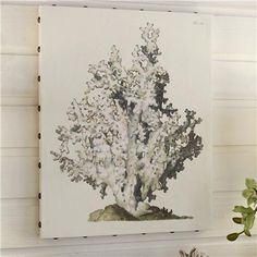 24x30 Textured Acropora on Canvas