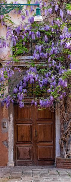 Wisteria flowering vine and beautiful large wooden archway door. Venice, Italy | Peter Lik Photography