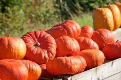cinderellas-carriage-pumpkin-variety.jpg