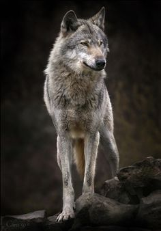 A lone wolf. That is all I am. I have no name, but such, a term as my name. I stand tall, no creature dominating me. I rule myself. No one else.