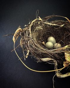 """This beautiful nest from another angle....a blackbirds nest...flamboyant in design"" by Sandy @ pottersarms on Instagram"
