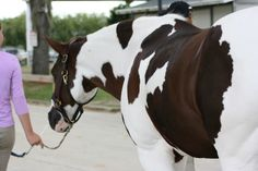 Such beautiful markings ... For The Horse Lover's Soul