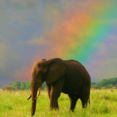 African elephant and rainbow