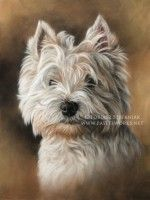 West Highland White Terrier Cute Animal Drawings, Animal Sketches, West Highland White Terrier, White Dogs, Art Background, Dog Portraits, Animal Paintings, Dog Art, Animal Pictures