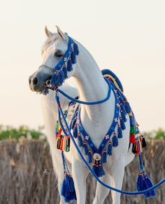The Count of Monte Cristo — Simply! … It's Arabian Beautiful Arabian Horses, Most Beautiful Horses, Majestic Horse, All The Pretty Horses, Animals Beautiful, Cute Animals, Arabian Stallions, Andalusian Horse, Friesian Horse