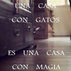 Una casa con gatos es una casa con magia - josu__sein