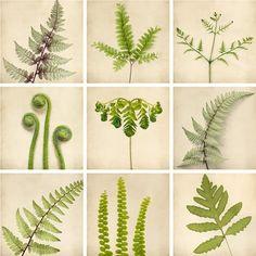 Ferns green emerald Create a pendant light fixture. green