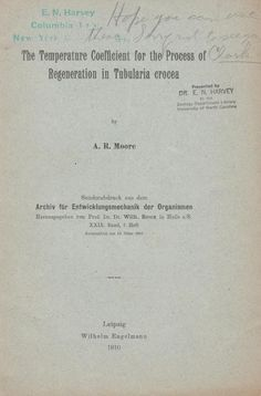 The Temperature Coefficient for the Process of Regeneration in Tubularia Crocea