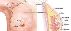 Estos 6 compuestos matan por completo las celulas del cáncer de mama