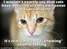 cat humour - Google Search