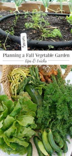 Tips for planning a fall vegetable harvest-start in June and July and harvest…