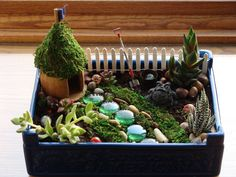 Super-easy indoor fairy garden!  The fairy house is a mini balsa wood birdhouse from Michaels ($1).  I used an exacto knife to cut out the door, stained the wood with two coats of Minwax and glued fake moss to the roof.  I used a small wooden dowel and a triangle of fabric to make the flag.  I found the succulents at CVS and the stones at Dollar Tree.