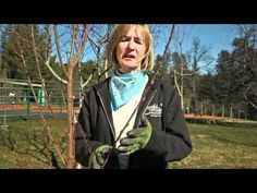 Short Video on how to prune fruit trees ,video wonderful
